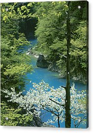 Trees By River, Akita Prefecture, Japan Acrylic Print
