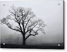 Trees In Fog # 2 Acrylic Print