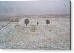 Trees In Snowstorm Acrylic Print