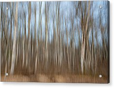 Trees In The Forest Acrylic Print
