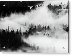 Acrylic Print featuring the photograph Trees In The Mist 1 by Stephen Holst