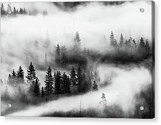 Acrylic Print featuring the photograph Trees In The Mist 2 by Stephen Holst