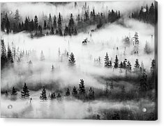 Acrylic Print featuring the photograph Trees In The Mist 3 by Stephen Holst
