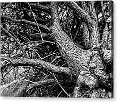 Trees, Leaning Acrylic Print