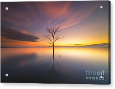 Trees Submerged In The Flooded The Time Acrylic Print