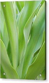 Tropical Leaf Acrylic Print