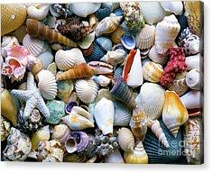 Acrylic Print featuring the photograph Tropical Treasure Seashells A91218 by Mas Art Studio
