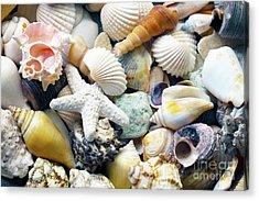 Acrylic Print featuring the photograph Tropical Treasure Seashells B91218 by Mas Art Studio