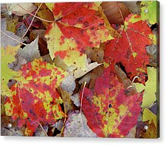 True Autumn Colors Acrylic Print