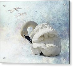 Acrylic Print featuring the photograph Trumpeter Textures #2 - Swan Preening by Patti Deters