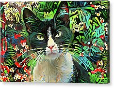 Tucker The Tuxedo Cat Acrylic Print