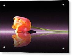 Tulip Reflection Acrylic Print