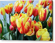Tulips And Tiger Stripes Acrylic Print