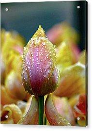 Tulips In The Rain Acrylic Print