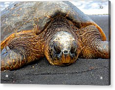 Turtle Rest Stop Acrylic Print