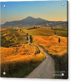 Tuscany, Cypress Road Acrylic Print