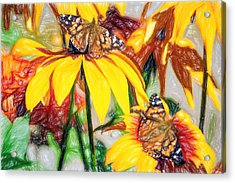 Twin Painted Lady Butterflies Pencil Acrylic Print