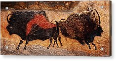 Two Bisons Running Acrylic Print