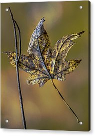 Acrylic Print featuring the photograph Two Buddies by Michael Arend