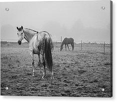 Two Horses Bw Acrylic Print by David Gordon