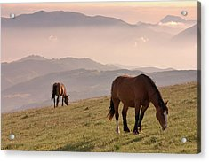 Two Horses Grazing On Mountain Top In Acrylic Print