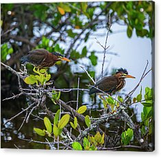 Two Is Better Than One Acrylic Print