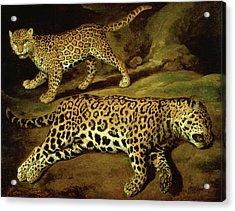 Two Jaguars Acrylic Print