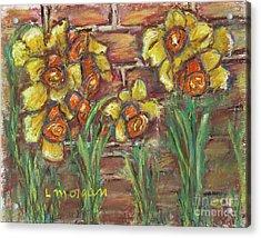 Two Toned Daffodils Acrylic Print