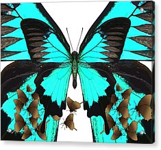 U Is For Ulysses Butterfly Acrylic Print