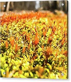 Acrylic Print featuring the photograph Orange Moss 2 by Atousa Raissyan