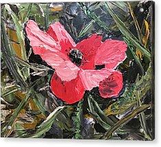 Umbrian Poppies 1 Acrylic Print