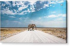 Under An African Sky Acrylic Print