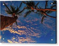 Upward Look Acrylic Print
