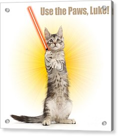 Acrylic Print featuring the photograph Use The Paws, Luke by Warren Photographic