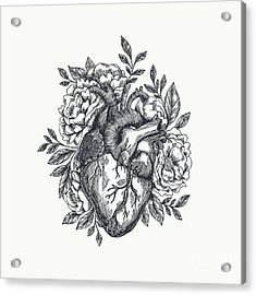 Valentines Day Card. Anatomical Heart Acrylic Print