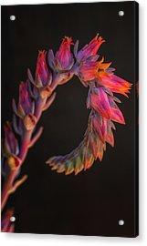 Vibrant Arc Acrylic Print