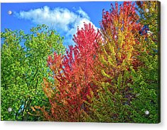 Acrylic Print featuring the photograph Vibrant Autumn Hues At Cornell University - Ithaca, New York by Lynn Bauer