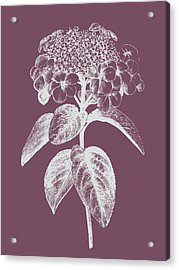 Viburnum Blush Purple Flower Acrylic Print