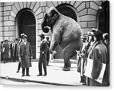 Victory, The G.o.p. Elephant, Stands In Acrylic Print by New York Daily News Archive