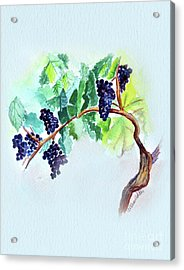Vine And Branch Acrylic Print