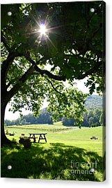 Vineyard In Georgia Acrylic Print