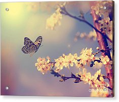 Vintage Butterfly And Cherry Tree Acrylic Print