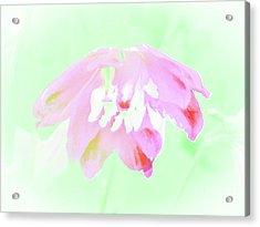 Violet Red Islamic Flora Acrylic Print