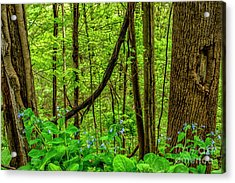 Virginia Bluebells And Tree Trunks Acrylic Print