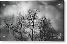 Waiting Bird Acrylic Print