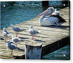 Waiting For A Feed Acrylic Print
