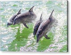 Wake Surfing Dolphin Family Acrylic Print