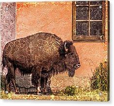 Wallpaper Bison Acrylic Print