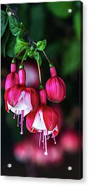 Wallpaper Flower Acrylic Print