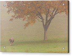 Walnut Farmer, Beynac, France Acrylic Print